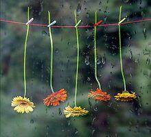 Teardrops by Joana Kruse