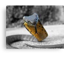 Select colouring2 Black and Yellow Tiger snake Canvas Print