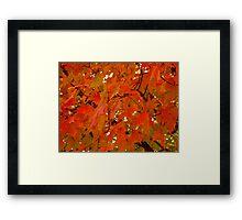 Autumn Leaves - 1  ^ Framed Print
