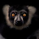 Lemur by Natalie Manuel
