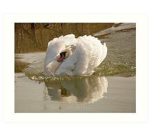 Swan with attitude Art Print