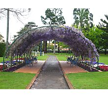 Wisteria vine growing over a large archway, Laurel Bank Park, Toowoomba. Qld. Australia Photographic Print