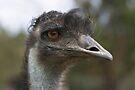 "Emu ~ ""a real aussie ~ true blue"" by Robert Elliott"