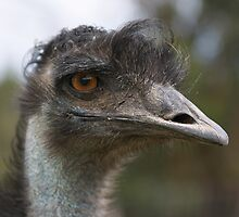 "Emu ~ ""a real aussie ~ true blue"" by Robert Elliott"