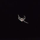 Spider in the night by Kaylene Passmore