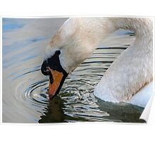 Swan with indifference Poster