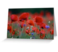 beautiful dancing poppy flowers.   A mnie jet szkoda lata. Andre Brown Sugar This image Has Been S O L D .  Fav 41 .  Buy what you like! Thx! Greeting Card