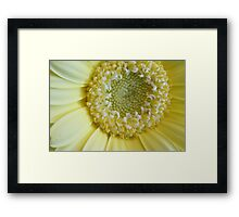 Pale yellow beauty Framed Print