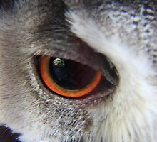 I see you by Keith Jones