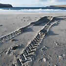 the giant skeleton by NordicBlackbird