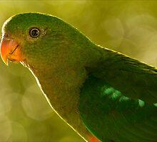 Pretty Bird 2 by Josie Eldred