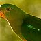 Your Best Bird Portrait