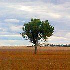 Roadside Vista 1502 by Margund  Sallowsky
