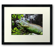 dragons in trees Framed Print