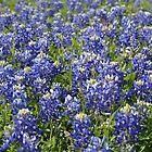 Blue Bonnets by Sue Ellen Thompson