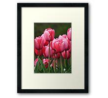 Pink tuilips version 2 Framed Print
