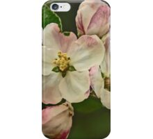 Apple Blossom Time #1 iPhone Case/Skin