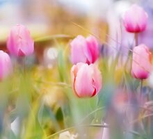 Dreamy Tulips by Darlene Lankford Honeycutt