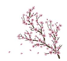 Blooming Sakura Branch 4 Photographic Print
