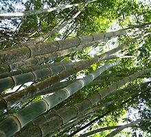 Up the Bamboo by MeBoRe