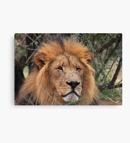 King! Canvas Print