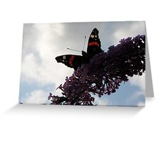 Red Admiral - No.4 Greeting Card