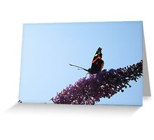 Red Admiral - No.5 Greeting Card