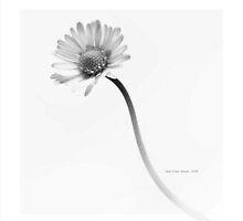 neslihan öncel 015 by Neslihan Öncel