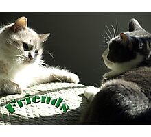 Best Kitty Friends Photographic Print