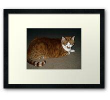 """Newman Pose"" Framed Print"