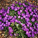 Purple by Simon Duckworth