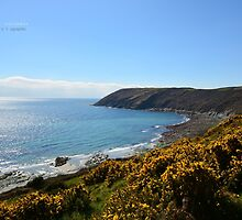 """"""" Yellow Gorse, Turquoise Sea """" by Richard Couchman"""