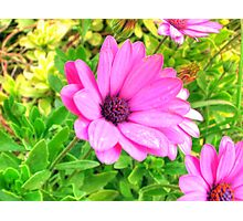 Flower in HDR Photographic Print