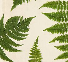 Forest Ferns on Vintage Paper by WildPoetry