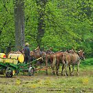 Amish Farmer and His Mule Team by Dyle Warren