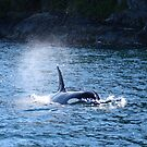 Orca by Robert Yone
