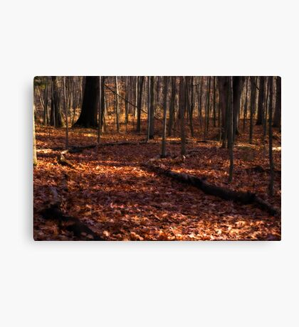 Favorite Walk Canvas Print
