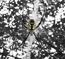 Arachnicolor by Artlife