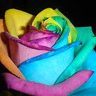 RAINBOW ROSE by sky2007