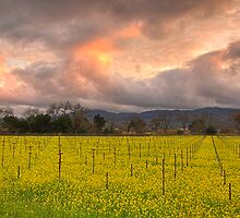 Napa Sunset by Mike Stone