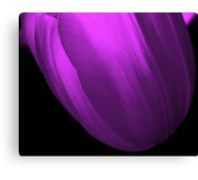 Abstract Purple in Tulip Canvas Print