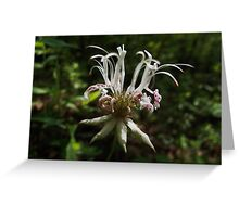Mystery Flower Greeting Card
