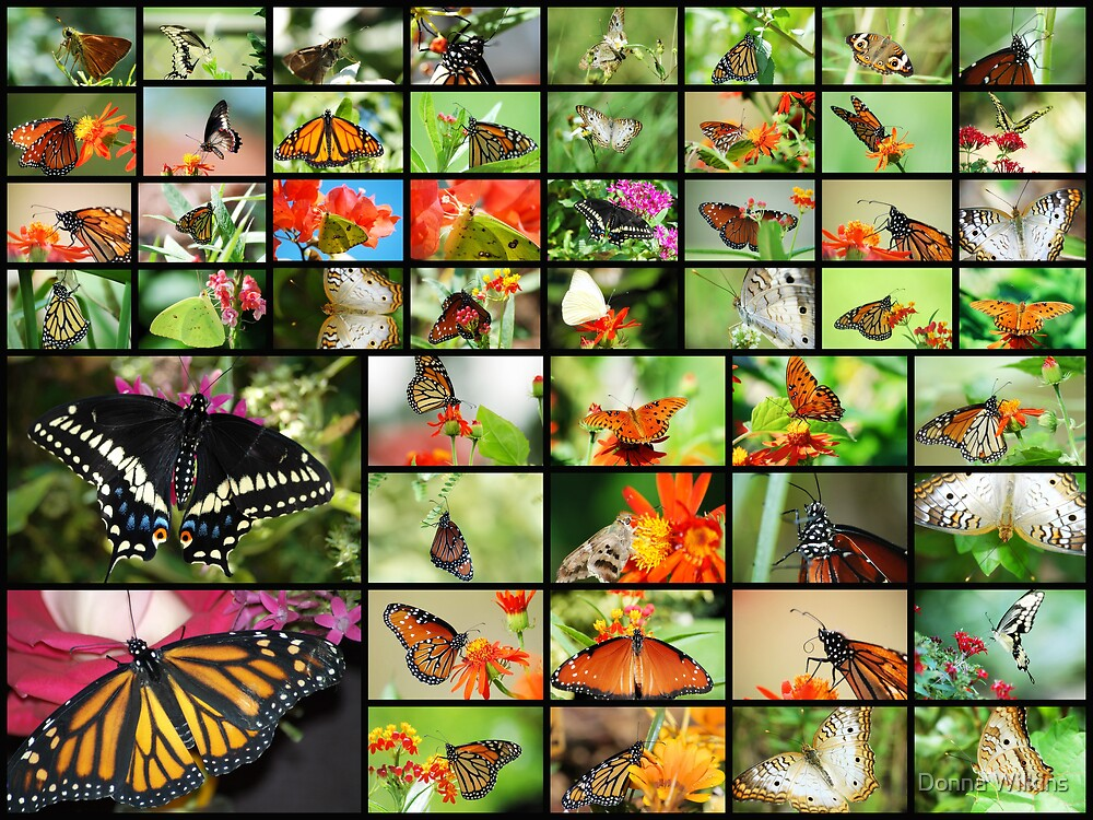 Butterfly Collection by Donna Adamski