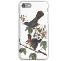 Gray Catbird - Audubon Birds of America, Dumetella carolinensis iPhone Case/Skin