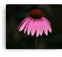 Most Photogenic Canvas Print