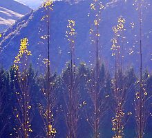 Golden Flakes by Harry Oldmeadow