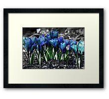 Spring Rebirth Framed Print