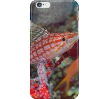 Hawkfish in Plaid iPhone Case/Skin