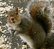 Squirrel Surprise  by Jasmine Staff