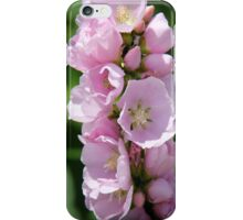 Mountain Hollyhock (Mallow) -  Iliamna rivularis iPhone Case/Skin